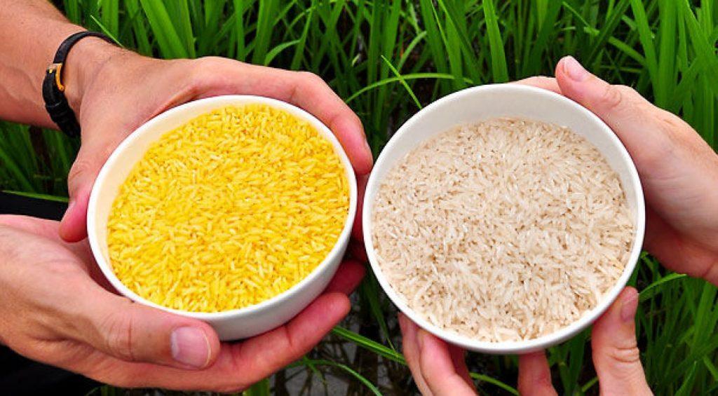 Thực phẩm biến đổi gen (GMO) mà mẹ bầu cần chú ý