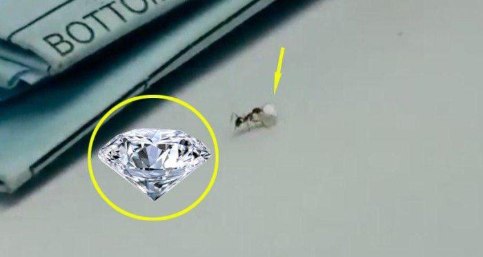"""Video: """"Đạo chích"""" tí hon cố gắng đánh cắp kim cương quý giá trong cửa hàng - H1"""