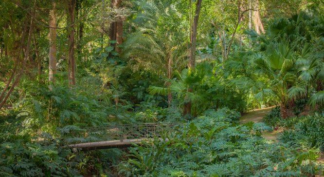 Có một ốc đảo ẩn mình trong vườn bách thảo ở nơi nóng và khô nhất Tây Ban Nha - H1