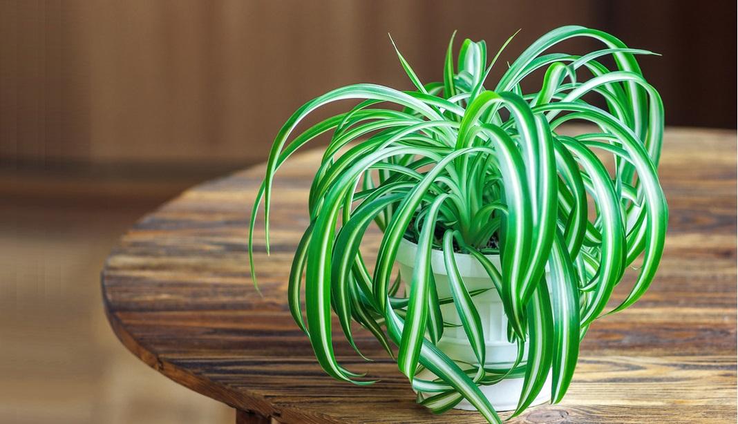 Nghiên cứu cho thấy, động thực vật đều nhận thức được nỗi đau. (Ảnh qua Kobieta Onet)