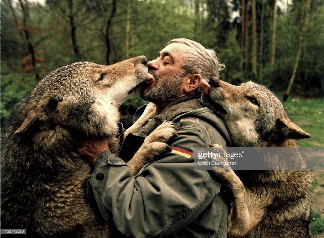 Người đàn ông kỳ lạ trở thành thủ lĩnh của bầy sói hung tợn.5