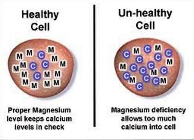 80% dân số thiếu Magie, gây ra các bệnh mãn tính - H5
