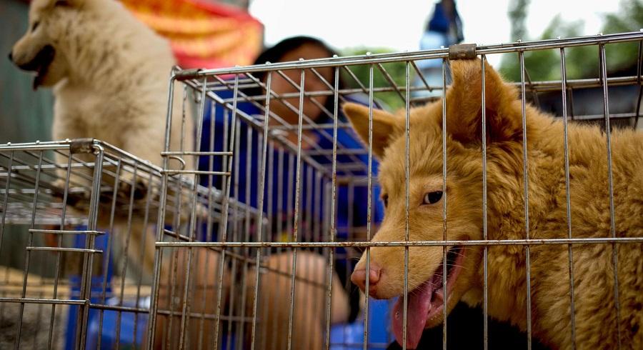 Hai lao động người Việt tại Đài Loan đối mặt bản án 2 năm tù vì giết chó