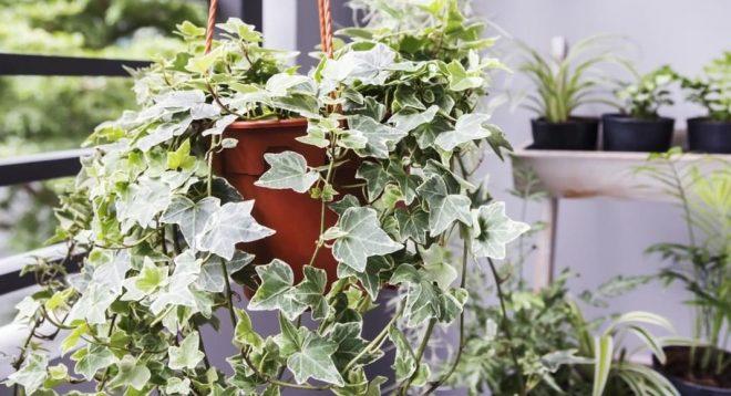Nasa công bố 5 loại cây trồng mỗi gia đình nên có để làm sạch không khí.
