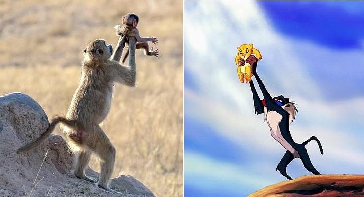 """Bức ảnh khỉ mẹ bế con tái hiện lại cảnh kinh điển trong bộ phim """"The Lion King"""""""