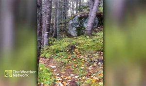 """Kỳ lạ hiện tượng """"khu rừng biết thở"""" ở Canada"""