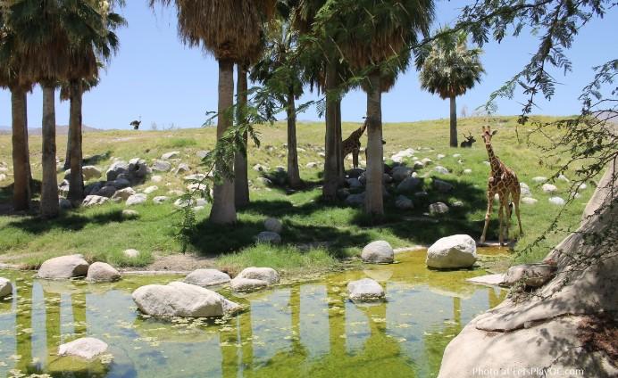 Khám phá kỳ quan tại công viên sa mạc giữa xứ cờ hoa.3