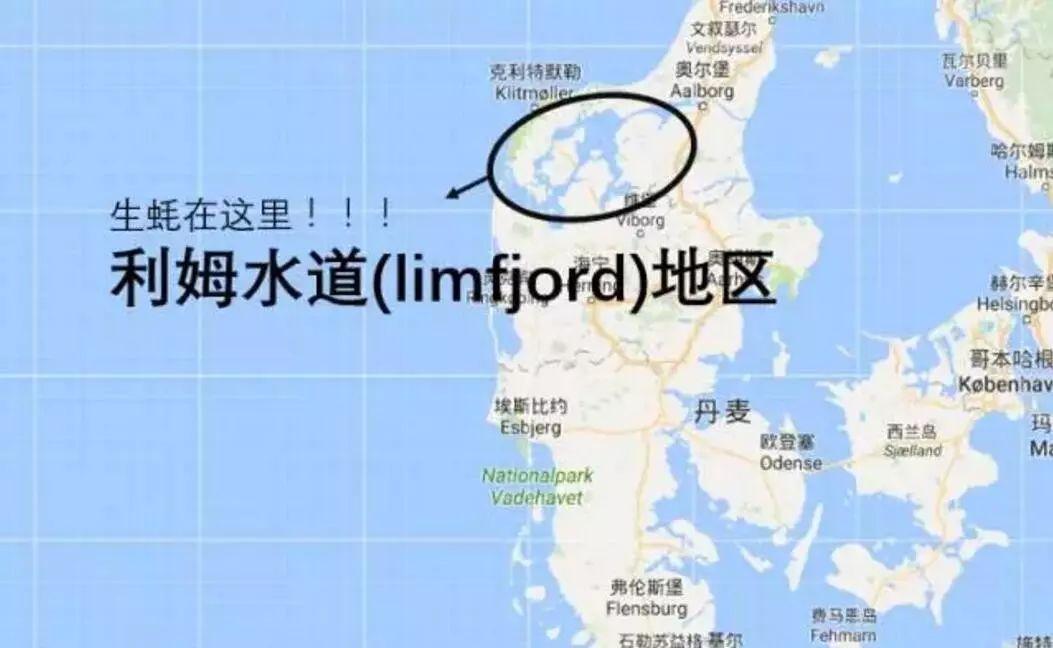 Bản đồ chỉ rõ những nơi có nhiều hàu. (Ảnh qua 微文库)
