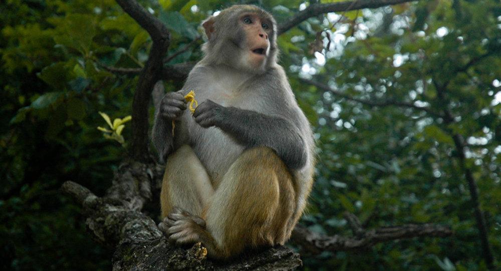 Đã xác định được nhóm người giết khỉ và phát trực tiếp trên Facebook.