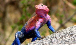 10 con vật có ngoại hình kỳ lạ nhất hành tinh. Số 7 cực kì đáng yêu