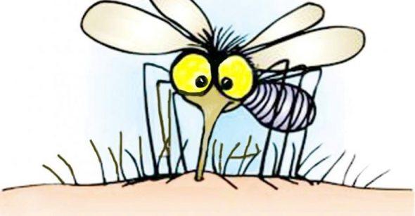 """Thầy bật ngửa sau khi nghe trò trả lời câu hỏi: """"Làm gì khi bắt được muỗi"""""""