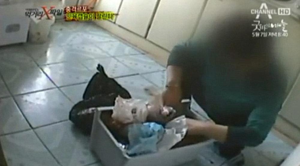 """Một dược sĩ Trung Quốc cho các phóng viên """"ngầm"""" của đài SBS (Hàn Quốc) xem bào thai để trong tủ lạnh, trong phóng sự điều tra của đài này năm 2012: (Nguồn: Internet)"""