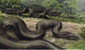 Mãng xà cổ đại nặng 1,5 tấn đang sống ở rừng Amazon?