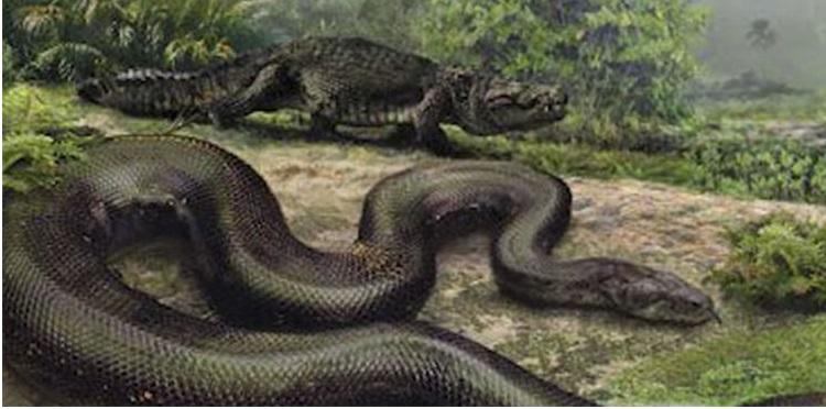 Mãng xà khổng lồ Titanoboa được cho là vẫn còn sống đến ngày nay.(Nguồn: Internet)