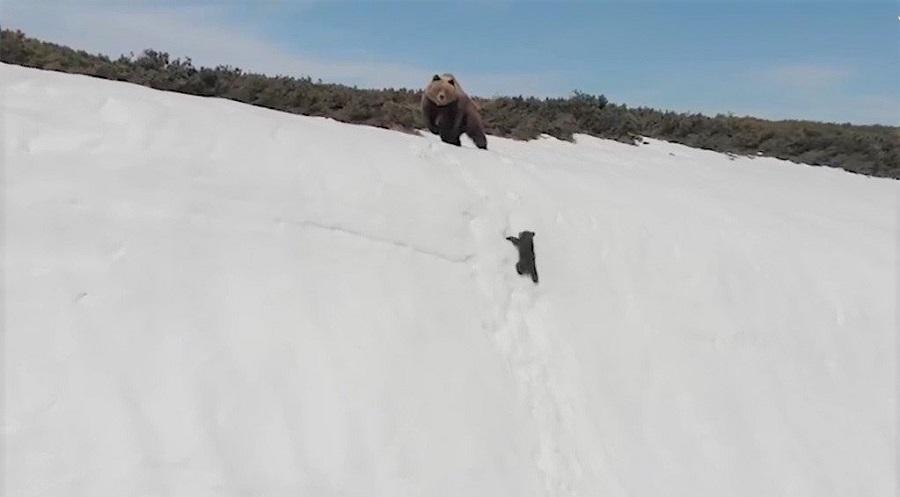"""Sự thật đằng sau đoạn clip """"Gấu con kiên trì leo lên vách núi tuyết dựng đứng"""".  Ảnh 1"""