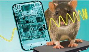 Nghiên cứu cho thấy bức xạ điện thoại di động liên quan tới các khối u ở chuột