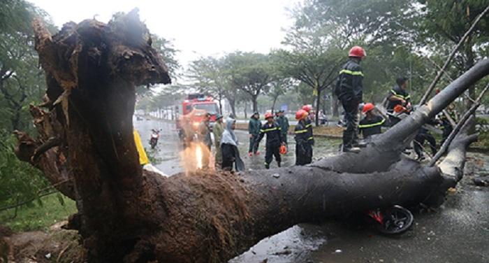 Sài Gòn: Nhiều tuyến đường ngập nặng, cây đổ đè người tử vong. Ảnh 1