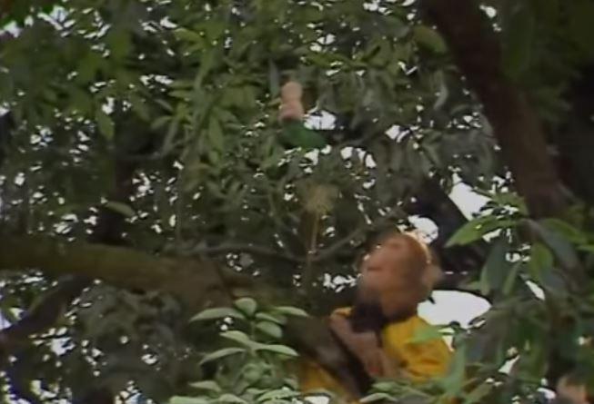 Quả nhân sâm hình trẻ em trong Tây Du Ký 1986 đã đi vào huyền thoại như thế nào - H3