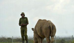 'Mặt tối con người' trong lệnh nới lỏng cấm buôn bán động vật hoang dã của TQ