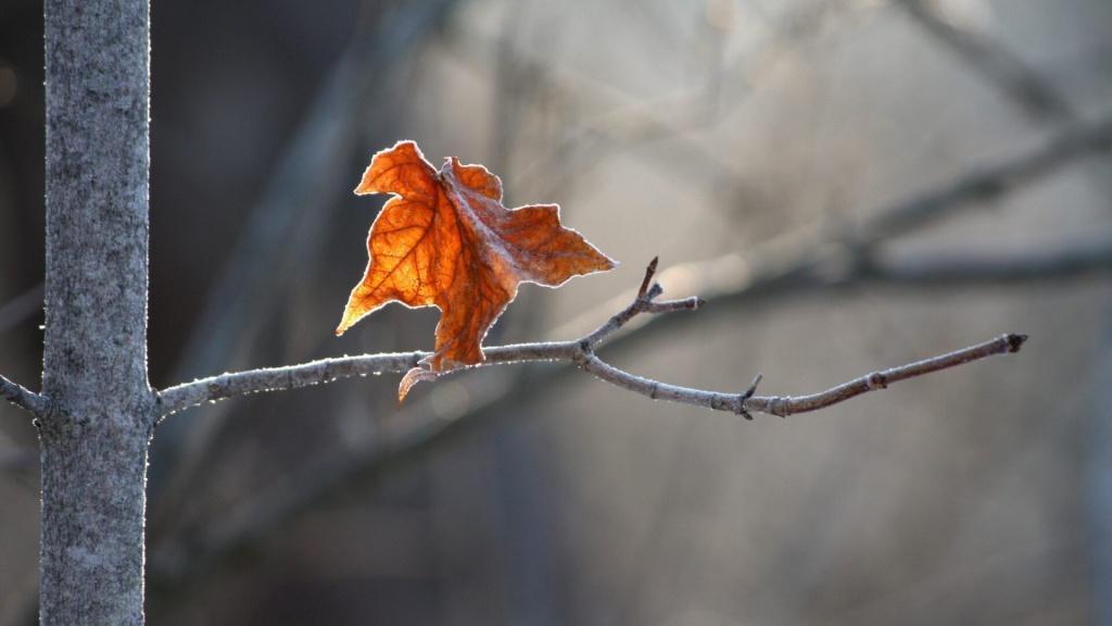 Việc tử hình trong thời cổ đại đều được tiến hành vào mùa thu