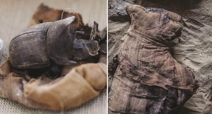 Xác ướp bọ hung và mèo được tìm thấy bên trong ngôi mộ Ai Cập cổ.1