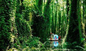 Một lần đến thăm chốn rừng thiêng nước độc U Minh Hạ