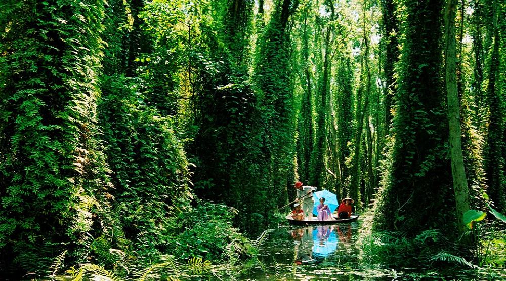 Rừng U MInh Hạ.(Nguồn: Internet)