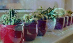 Ý thức truyền vào nước giúp hạt giống phát triển nhanh hơn