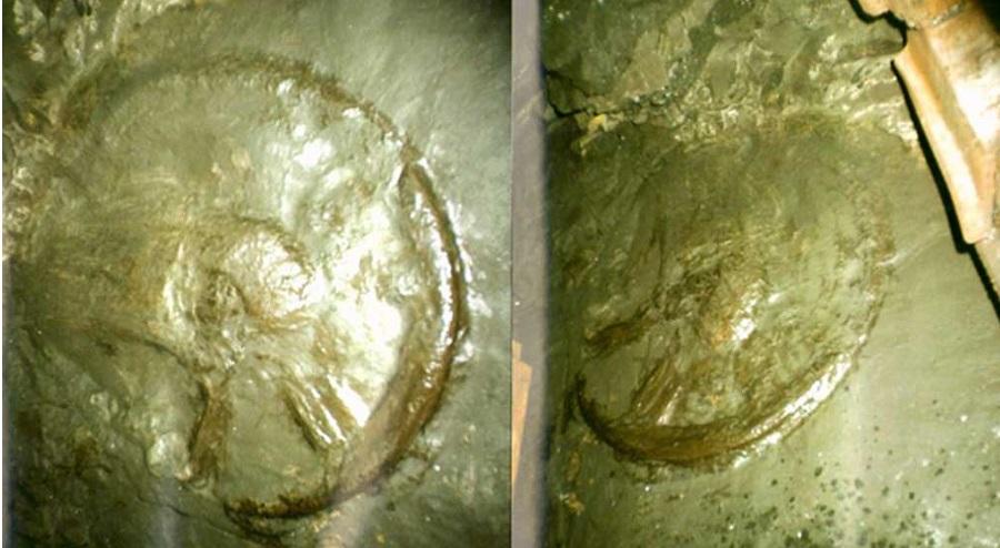 Bí ẩn bánh xe 300 triệu năm tuổi và những vết xe lạ thường trên khắp thế giới. Ảnh 1