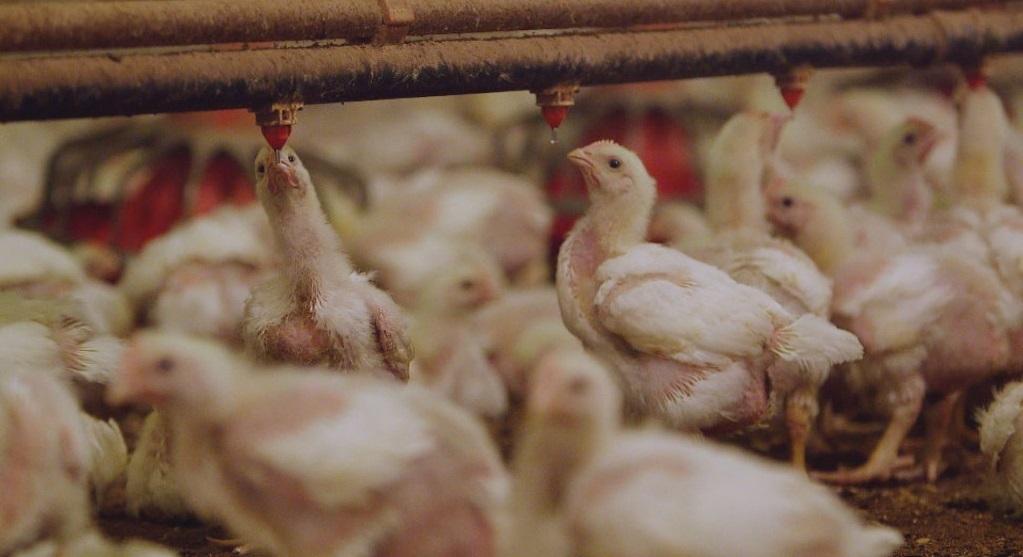 Lạm dụng thuốc kháng sinh, sức khỏe của người dân toàn thế giới đang bị đe dọa