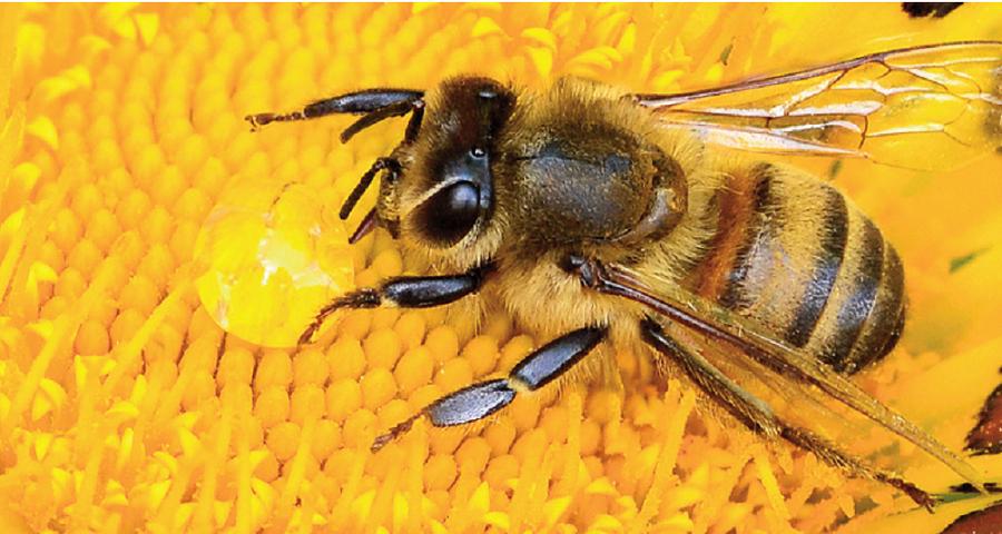 đây là cách phân biệt mật ong thật của các chuyên gia. Ảnh 1