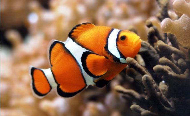 Nếu bạn đánh giá một con cá bằng khả năng leo cây thì cả đời (con cá đó) sẽ nghĩ rằng mình ngu ngốc