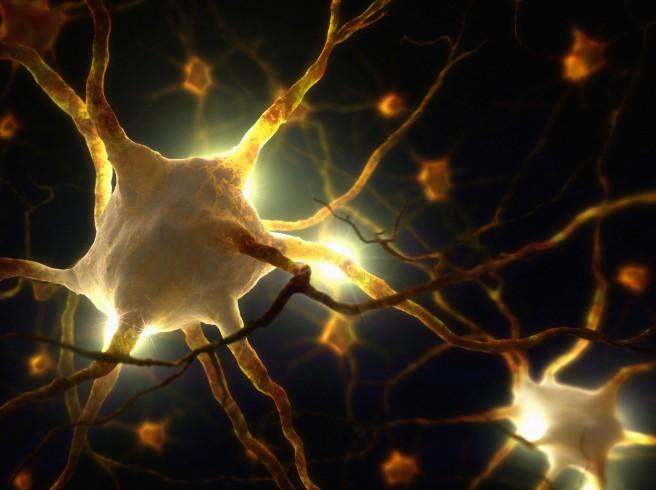 Ý thức của con người có thể liên quan trực tiếp đến ánh hào quang.2