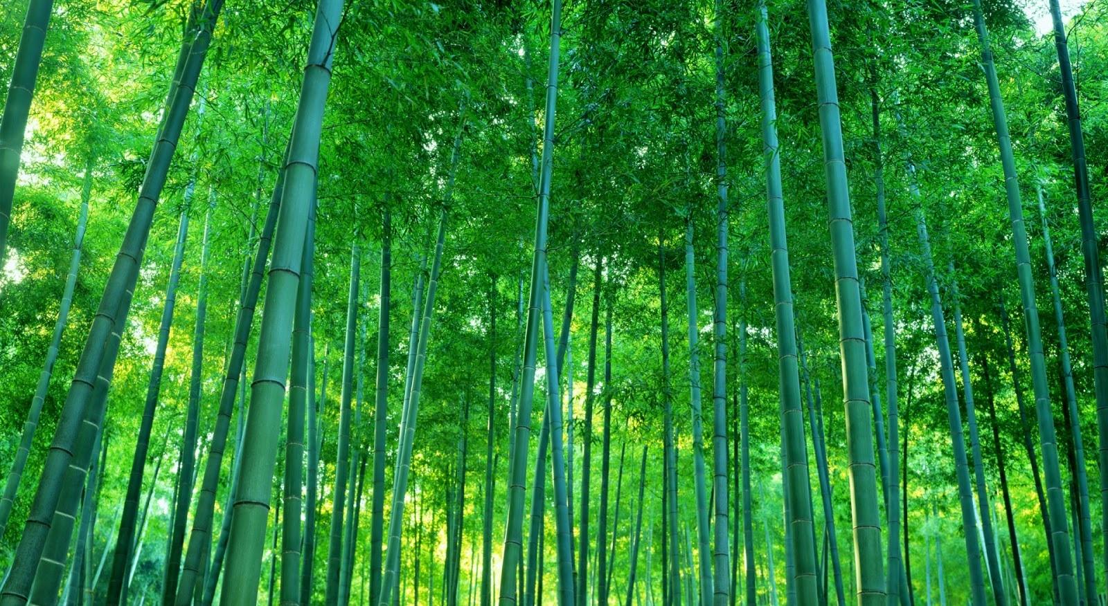 Người đàn ông đau khổ tìm được nghị lực sống nhờ bài học từ cây tre