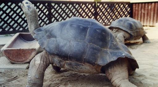 Tình yêu nhạt nhòa sau 115 năm chung sống, cặp vợ chồng cụ rùa quyết ly hôn tại sở thú Reptilienzoo Happ
