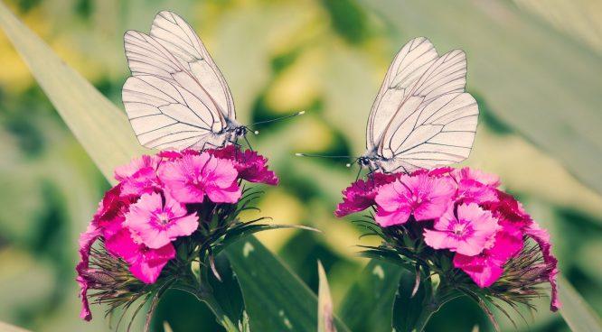 Vì sao Lương - Chúc sau khi chết lại hóa thành bướm, chứ không phải con vật khác?