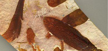 Tìm thấy khu rừng già cỗi hơn cả loài khủng long ở… Nam Cực