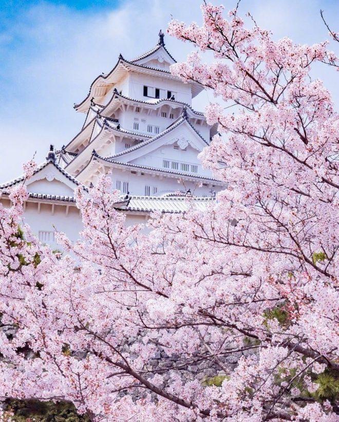 Mùa sakura Nhật Bản qua ống kính của một nhiếp ảnh gia.8