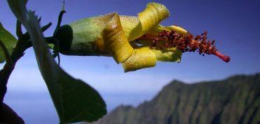 Thiết bị bay không người lái phát hiện loài hoa được cho là tuyệt chủng