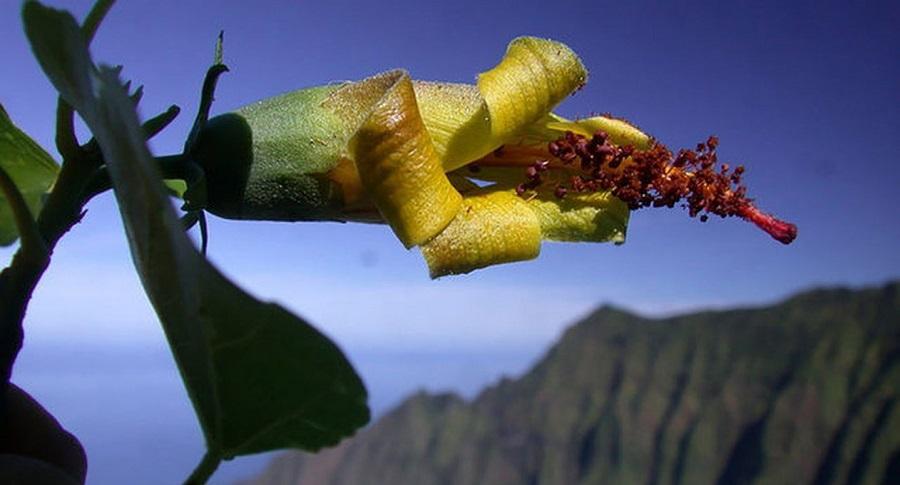 Thiết bị bay không người lái phát hiện loài hoa được cho là tuyệt chủng. Ảnh 1
