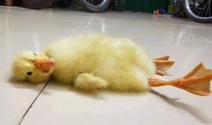 Việt Nam nắng nóng kỷ lục: 1 thanh niên vỡ mạch máu não, trứng lộn nở vịt con