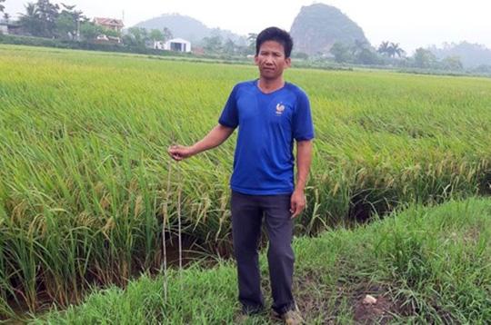 Nông dân Ninh Bình khóc ròng vì bị kẻ xấu cắm chông sắt đầy ruộng, phá máy gặt lúa.3