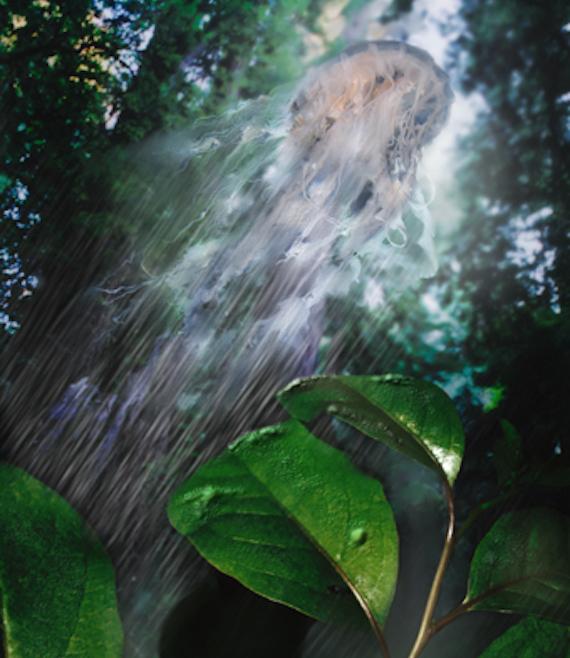 Sứa bay - Sinh vật duyên dáng nhất trong thế giới huyền bí
