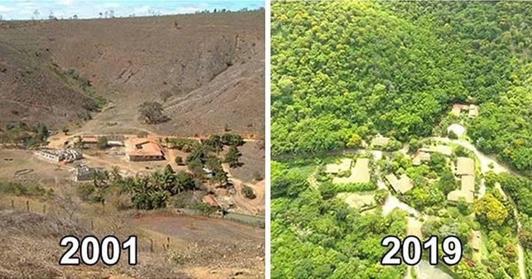 Cần mẫn suốt 20 năm: Một cặp vợ chồng Brazil biến hoang mạc thành rừng - ảnh 1