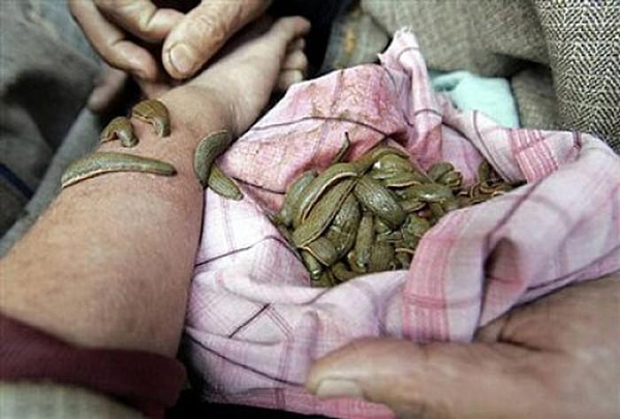 Gia Lai: Người dân đổ xô đi đẽo vỏ thông bán cho thương lái Trung Quốc. 5