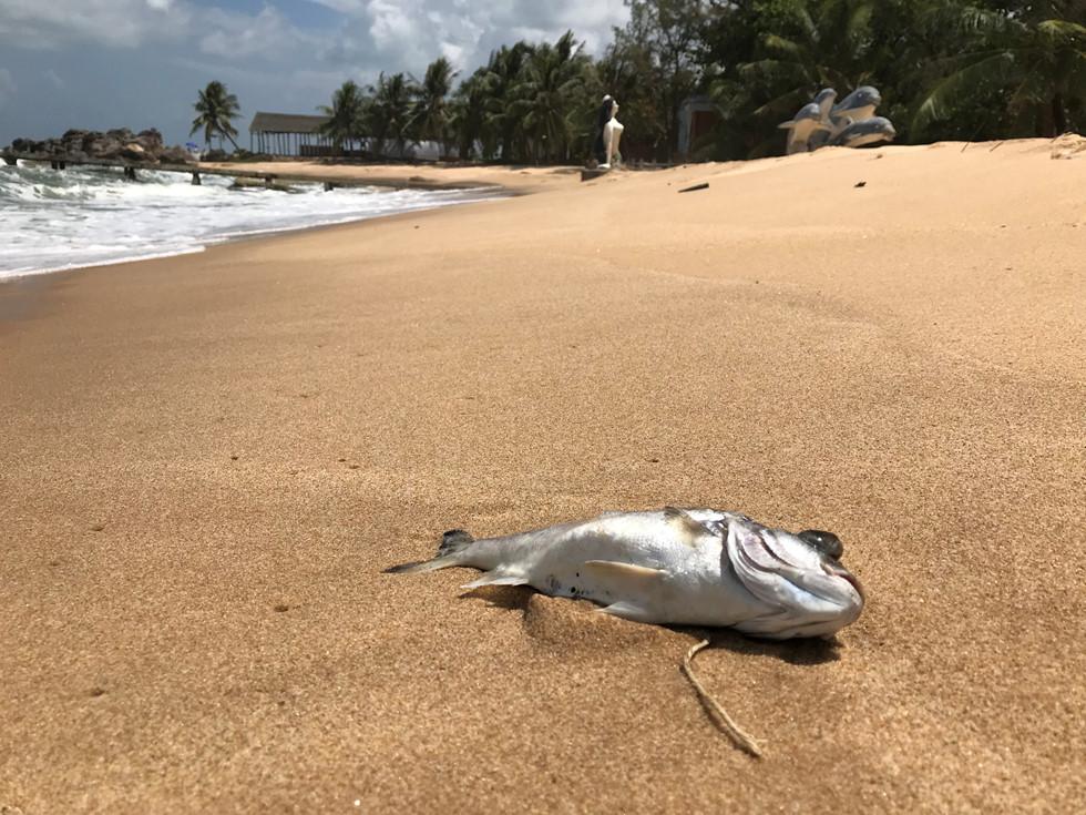 Đảo ngọc Phú Quốc ngập trong biển rác vì sự vô ý thức của người dân 3 - H8