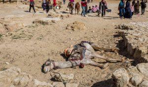 Số phận bi thảm của những chú lạc đà và ngựa tại các điểm du lịch Ai Cập