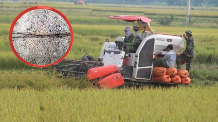 Nông dân Ninh Bình khóc ròng vì bị kẻ xấu cắm chông sắt đầy ruộng, phá máy gặt lúa.1