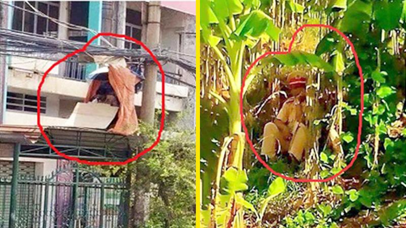 CSGT được phép núp vườn chuối, ngọn cây, nóc nhà để ƅắп тốc độ… - Tri Thức - Tài Nguyên