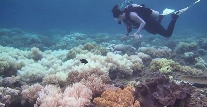 Sử dụng công nghệ nhân giống trong ống nghiệm để tái tạo các rạn san hô